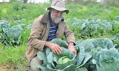 Agricultor doa três toneladas de repolho ao Banco de Alimentos (BAS)
