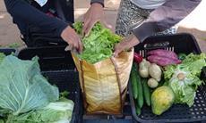 Dia Mundial da Segurança dos Alimentos é oportunidade de conscientização