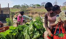 Banco de Alimentos combate a fome na periferia; veja como doar